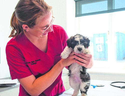 Nyt loktalt dyrehospital på 800 m2 i Sønderborg